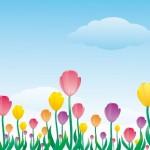 koinobori_tulip